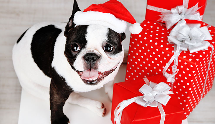 christmas presents for cats and dogs and their owners - Christmas Presents For Dogs